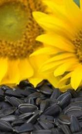 Imágen de vitamina B1 en alimentos
